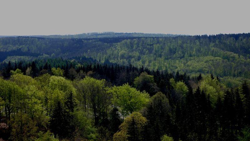 Blick vom Hermanns-Denkmal auf den Teutoburger Wald in Richtung Egge. Foto: A. Niemeyer-Lüllwitz