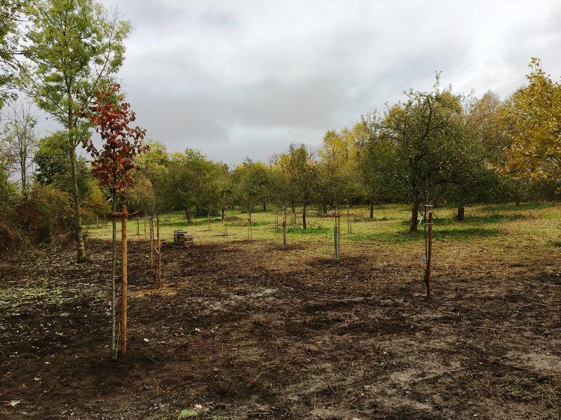 Vorbildcharakter: Obstbaumspende für Insekten und Klima
